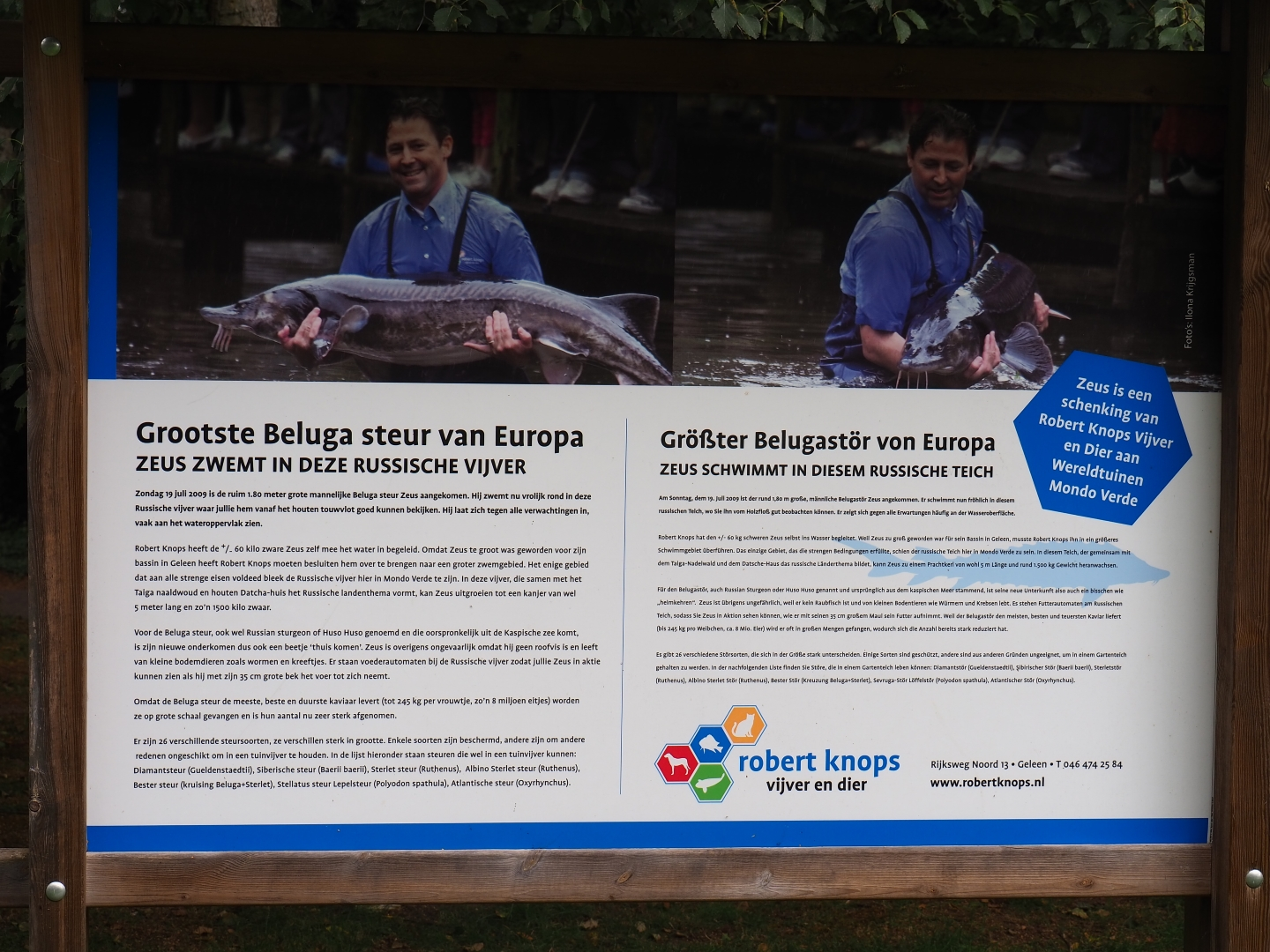 Alle Anderen 2009 sign largest beluga sturgeon (aug 28th, 2018) - zoochat