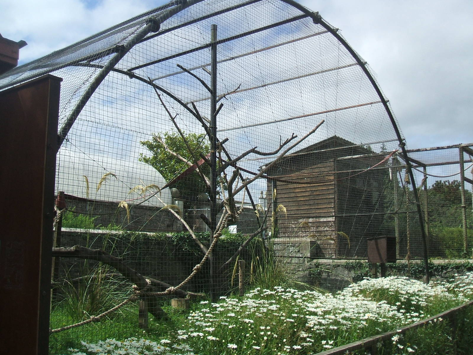 Charlotte On The Cheap >> Spider Monkey enclosure - ZooChat