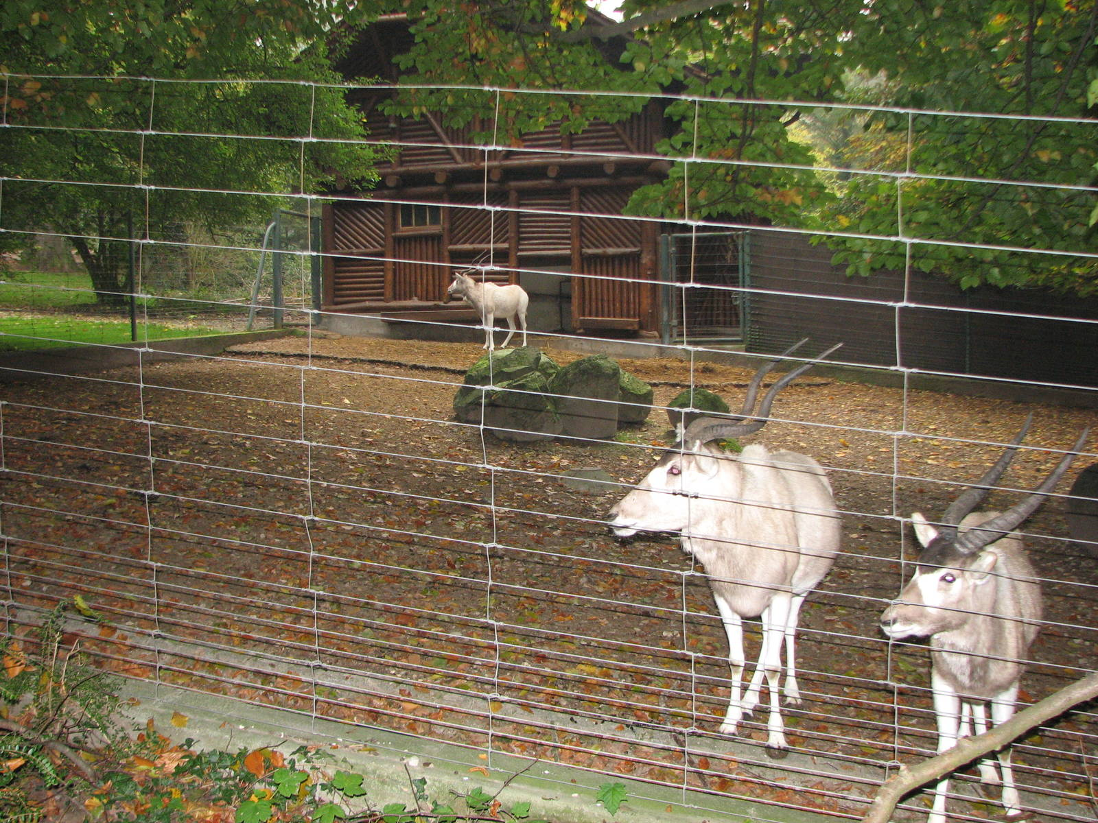 zoo de mulhouse 2006 addax enclosure zoochat. Black Bedroom Furniture Sets. Home Design Ideas